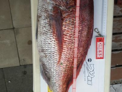 真鯛5.2 キロ