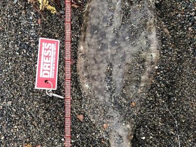 北海道道南サーフにて