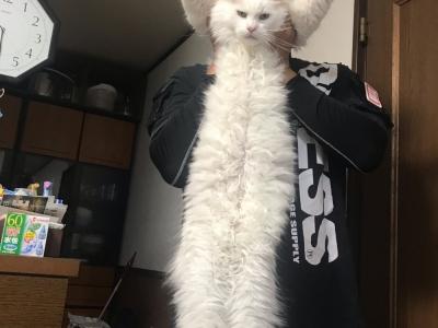 我が家の巨猫2