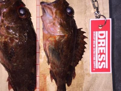 続根魚調査