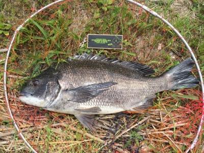 若潮だけど、釣れる時は釣れる な1枚